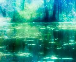 森林浴でストレス軽減